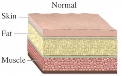 Body Tissue Layers